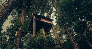 Tree House at Ela Ecoland Munnar