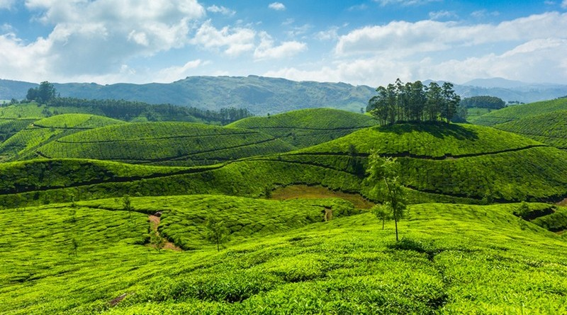 munnar-honeymoon-package
