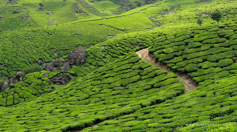 grand-tour-of-munnar-and-backwaters