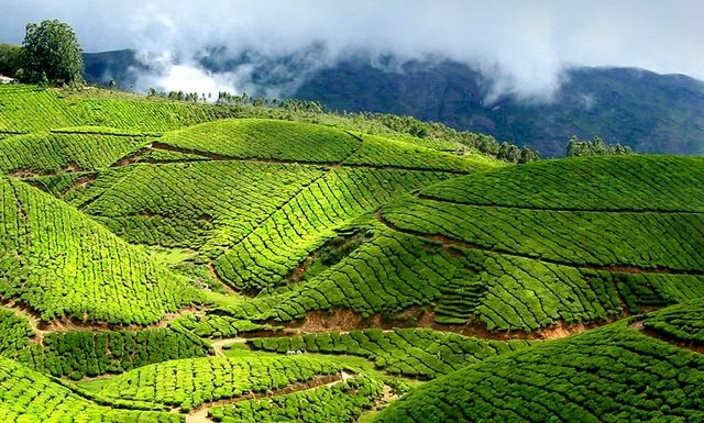 Munnar Travel Guide-First time visitor tips