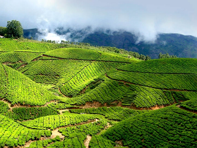 Munnar Honeymoon Packages from Bangalore- Booking Tips
