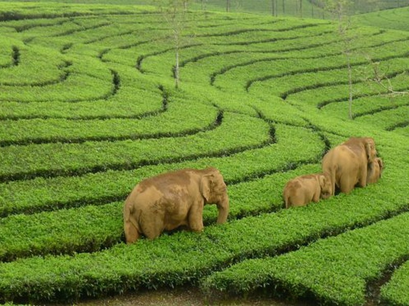 Top 20  best things to do in Munnar
