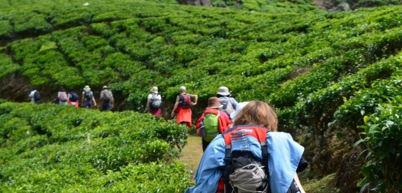 Meesapulimala Trekking – Tips on Booking, Stay , Tour and Route