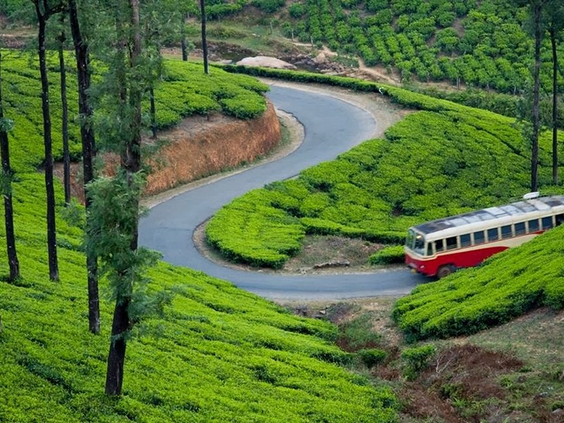 Bangalore Munnar Trip- A Complete Travel Guide