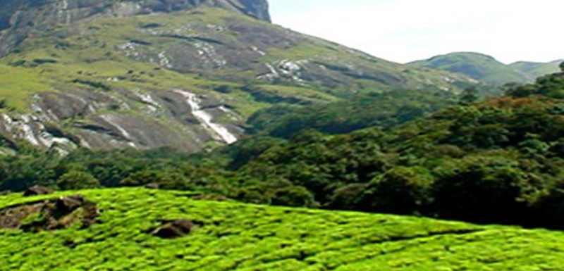 Best time to Visit Munnar- Munnar Weather, Season and Climate for each month
