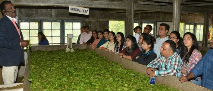 Demonstration at Lockhart Tea Factory and Museum in Munnar
