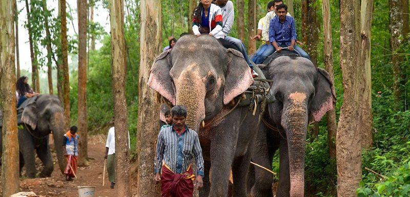Carmelagiri Elephant Park in Munnar