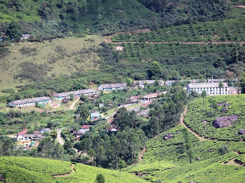 View of Tea Estates from Chokramudi