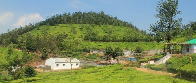 Kolukkumalai Tea Estate-Highest Tea Plantation in the world