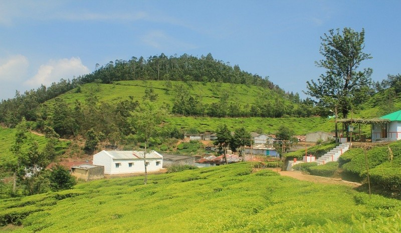 kolukumalai-tea-estate-view