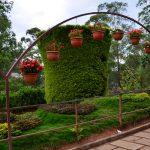 rose-gardens-munnar01
