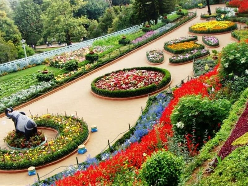 rose-gardens-munnar03