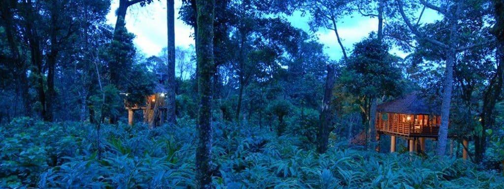 Top 10 Best Tree Houses in Munnar