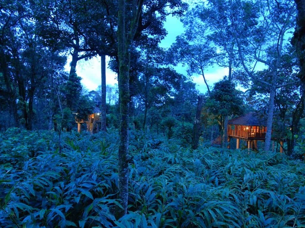 Top 10 Best Tree Houses in Munnar
